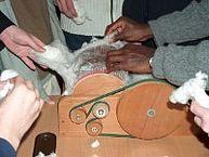Bearbeitung von Baumwolle im Rahmen eines Workshops